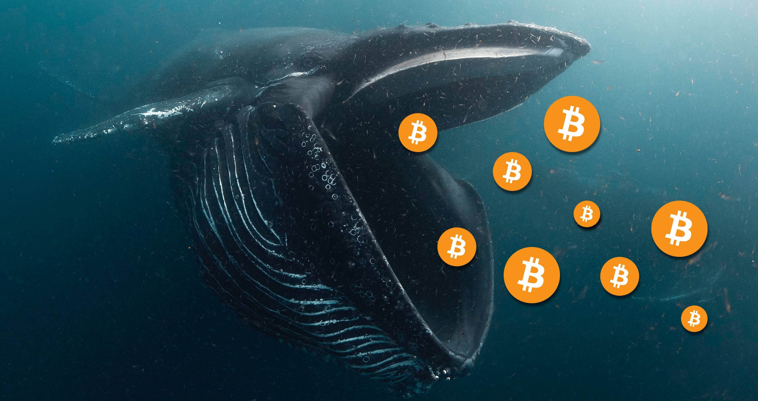 Whales boost bitcoins